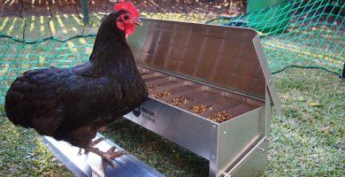 comederos para gallinas