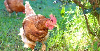 gallineros ecológicos