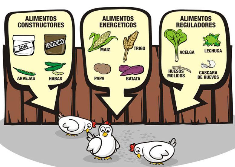 tabla de alimentacion para gallinas