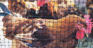 Mallas para gallineros